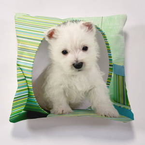 Iconic Westie in Box Cushion Personalise it for FREE Cushions