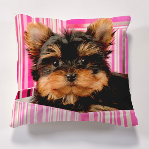 Iconic Dog in Box Cushion Personalise it for FREE Cushions